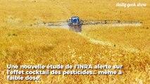 L'INRA alerte sur l'effet cocktail des pesticides