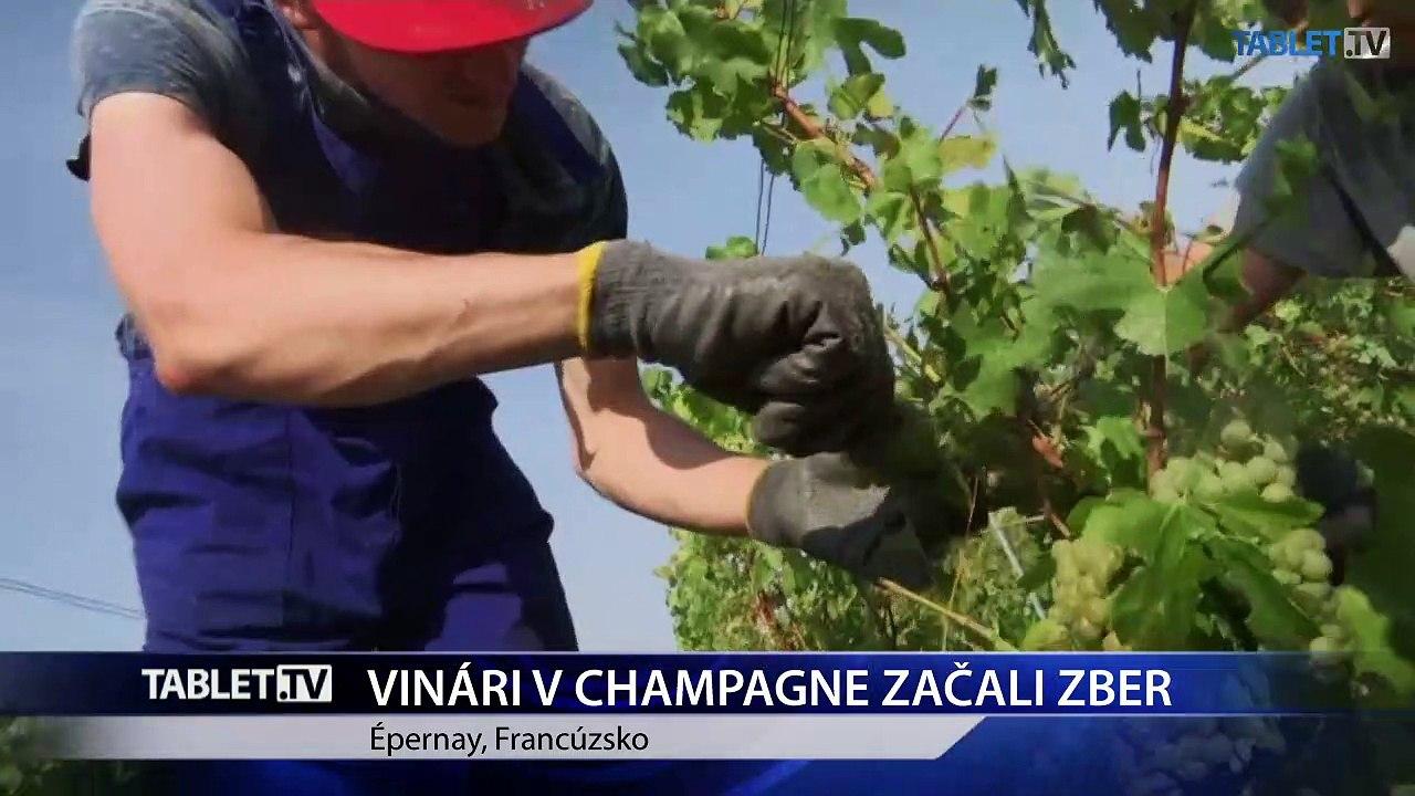 Vinári z oblasti Champagne vo Francúzsku už začali so zberom hrozna