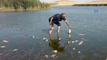 Gölde korkutan balık ölümleri...Onlarca ölü balık kıyıya vurdu
