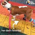 This dog had a rough past, but she has the best dad now and she just got brand new feet! She's SUPER fast now and has the most epic sock collection — a special
