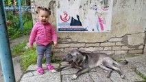 Un enfant mignon rencontre chien amical - Toddler Lile veut jouer avec un chien