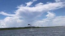 Un dauphin fait des sauts incroyable devant les touristes