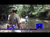 Fenomena Harimau Masuk Pemukiman & Memangsa Hewan Ternak-NET12