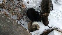 Chats dans la neige [La vie de chat dans la rue]