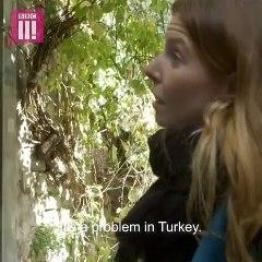 BBC Muhabiri - Stacey Dooley  Türkiye'de Genelevleri İnceliyor