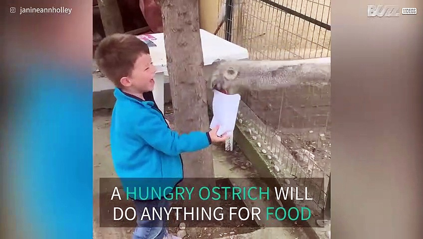 Hungry ostrich steals kid's popcorn