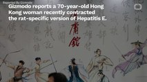 Rat Hepatitis In A Human Rears Ugly Head In Hong Kong--For The Second Time