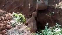 Ils sauvent le bébé de cette maman éléphant et elle va se montrer très reconnaissante en leur faisant coucou de la trompe