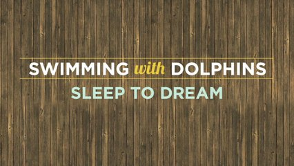 Swimming With Dolphins - Sleep To Dream