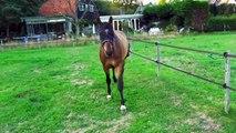 MY HORSE GETS KICKED