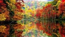 Autumn Leaves (JazzFunk vers, G minor) Backing track HD720 m2 basscover Bob Roha