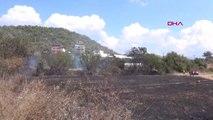 Antalya Meyve Ağaçları Yangında Zarar Gördü