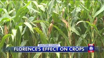 North Carolina Farmers Prepare for Hurricane Florence