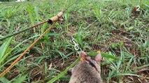 [EXTRAIT] Les Animaux face au terrorisme : RATS - 2/10