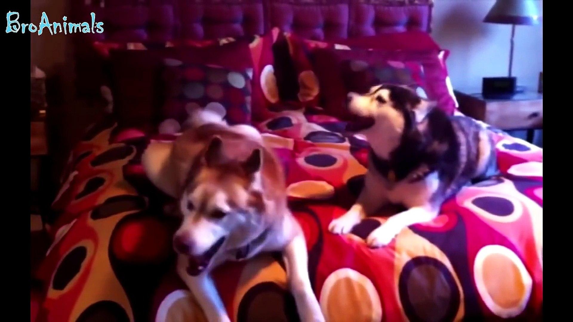ПРИКОЛЫ С ЖИВОТНЫМИ, приколы с собаками подборка - FUN WITH ANIMALS, funny dogs compilation #417