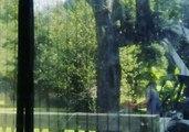 North Carolina Residents Take Down Trees Ahead of Hurricane