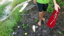 Cắm Câu Cá Lóc Ở Miền Tây Sông Nước Nhìn Vừa Lạ Vừa Đã Mắt
