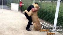 Diese Löwin trifft auf den Mann, der ihr einst das Leben gerettet hat – Das ist ihr Dank!