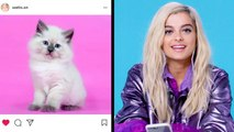 Bebe Rexha Breaks Down Her Favorite Instagram Follows