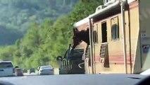 Ce cheval prend l'air, la tête en dehors du camion