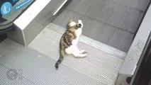 Ce chat s'amuse avec un escalator... Tellement drôle