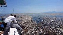 Une île de déchets dans la mer des caraïbes : catastrophique
