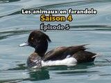 Les animaux en farandole: saison 4: épisode 5