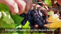 """Chypre vendange """"le vin des rois et des dieux"""""""