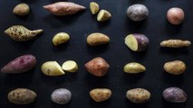 Which Type of Potato Is Best For Grilling, Mashing + Baking?