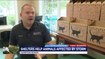 Virginia Animal Shelter Takes in Pets Affected by Florence