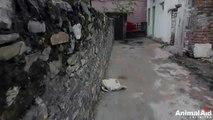 Ce chien abandonné dans la rue va être sauvé.