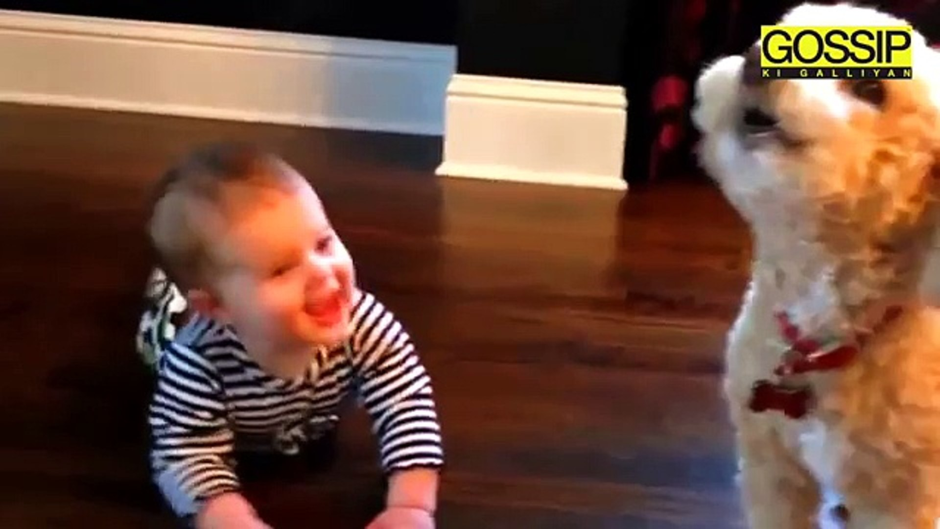 Cute Dogs | Cutest Dogs In The World | Cute Dogs Videos