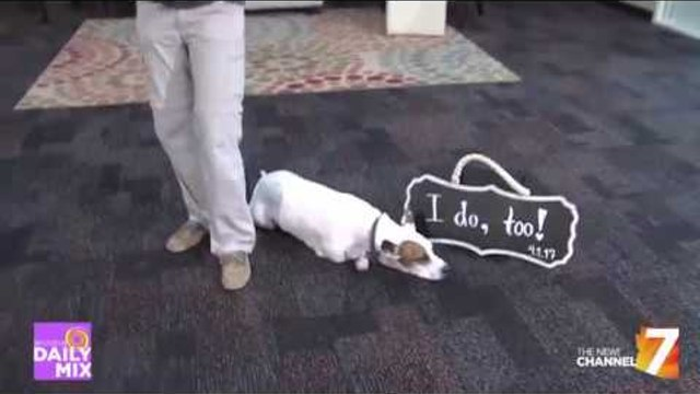 Pets In Your Wedding Party