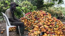 La Côte d'Ivoire se convertit au commerce équitable