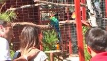 Il apprend à un perroquet à dire un gros mot pour qu'il le répète devant des touristes !
