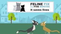 Feline Fix by Five: Veterinarians Update Best Practice for Spaying & Neutering Felines