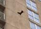 Raccoon Scales Outside of Ocean City Building, Drops Nine Floors and Flees