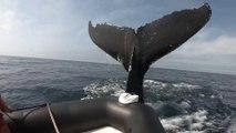 Impresionante : ballena pega una lancha con su aleta