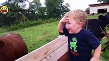 Funny Cow Licks Boy's Head! - Cute Farm Kids Compilation