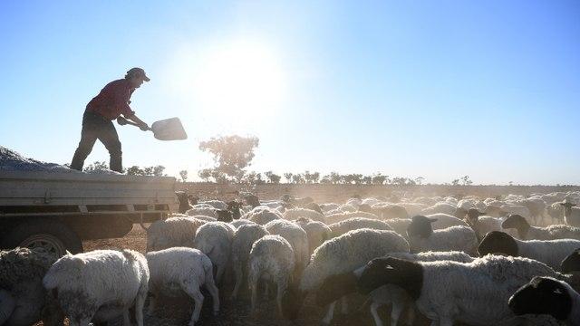 Kimbal Musk: Tariffs Hurting Our Farmers