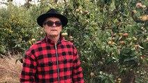 Le verger conservatoire d'Asnieres-sur-Vègre ouvre ses portes pour une récolte extraordinaire