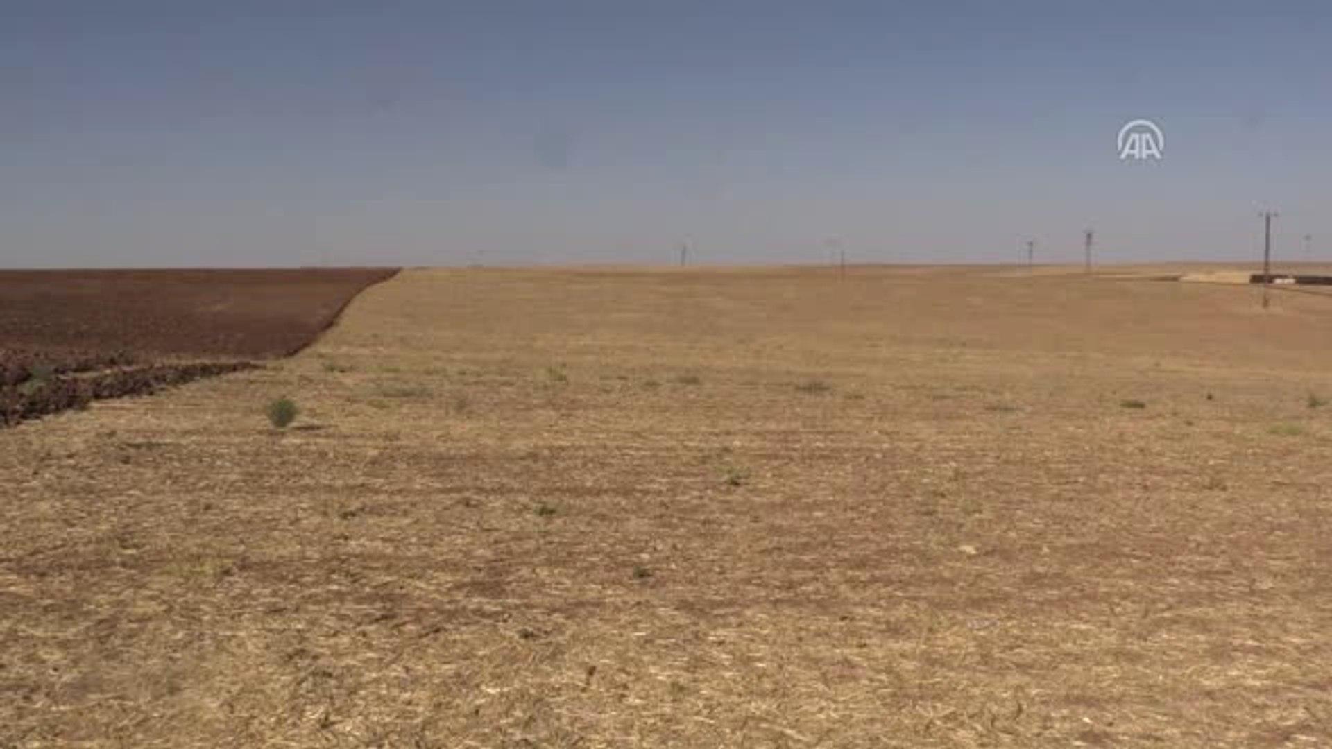 Gübrede İndirim ve Prim Desteği Güneydoğu Çiftçisine Can Suyu Oldu - Diyarbakır