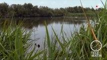 Environnement : l'inquiétante disparition des zones humides