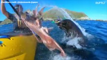 Video Whip-SPLASH! Seal slaps man in the face with an octopus