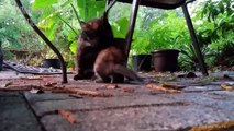 Momma cat talking to Their beautiful Meowing kittens  - Cute Family Cats Compilation