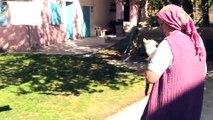 Köyün kaderine terk edilen kedilerine annelik yapıyor - YOZGAT
