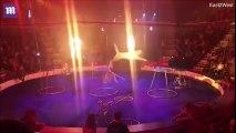 Un tigre s'évanouit dans un cirque. Ce qui se passe après est encore plus choquant ! A dénoncer !