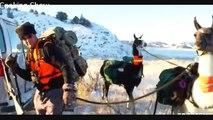 MeatEater - S01E05 - Brotherhood Badlands and Pack (Llamas Montana Mule Deer)
