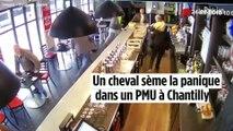 """Jument dans un bar à Chantilly : « J'ai juste eu le temps de crier """"cheval"""" »"""