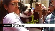 Animal lovers have their pets blessed on Saint Francis of Assisi Day